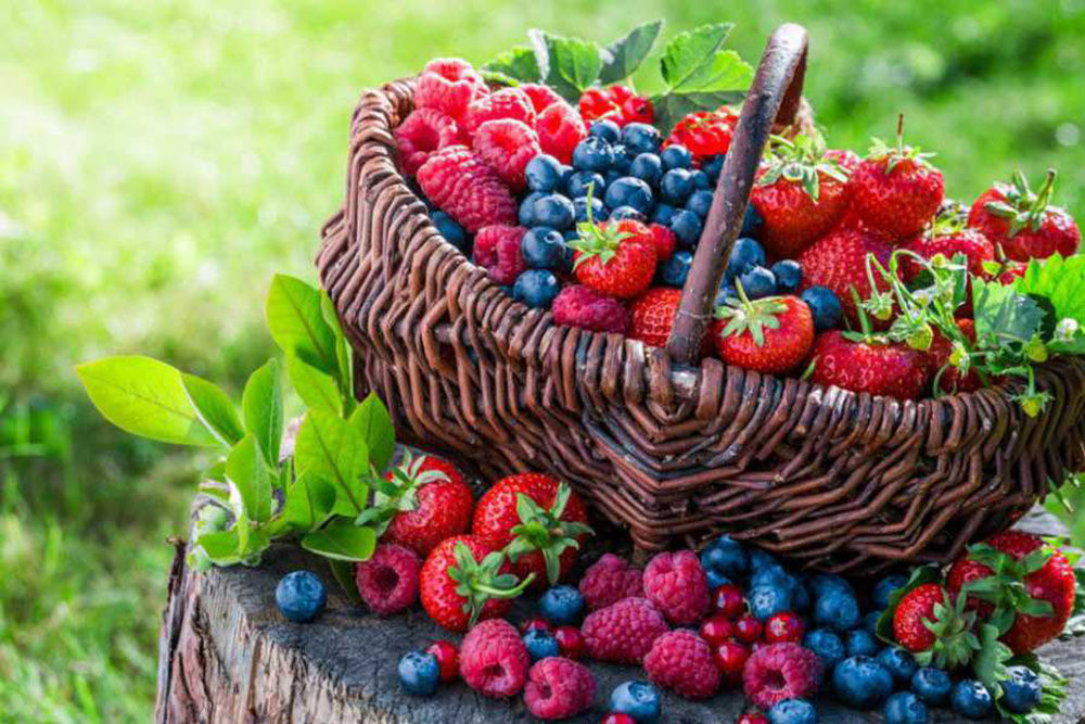 Употреблять свежие ягоды
