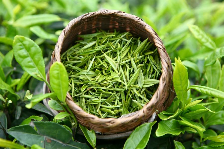 Изображение - Как влияет чай на давление человека zelenyj-sort-chaya