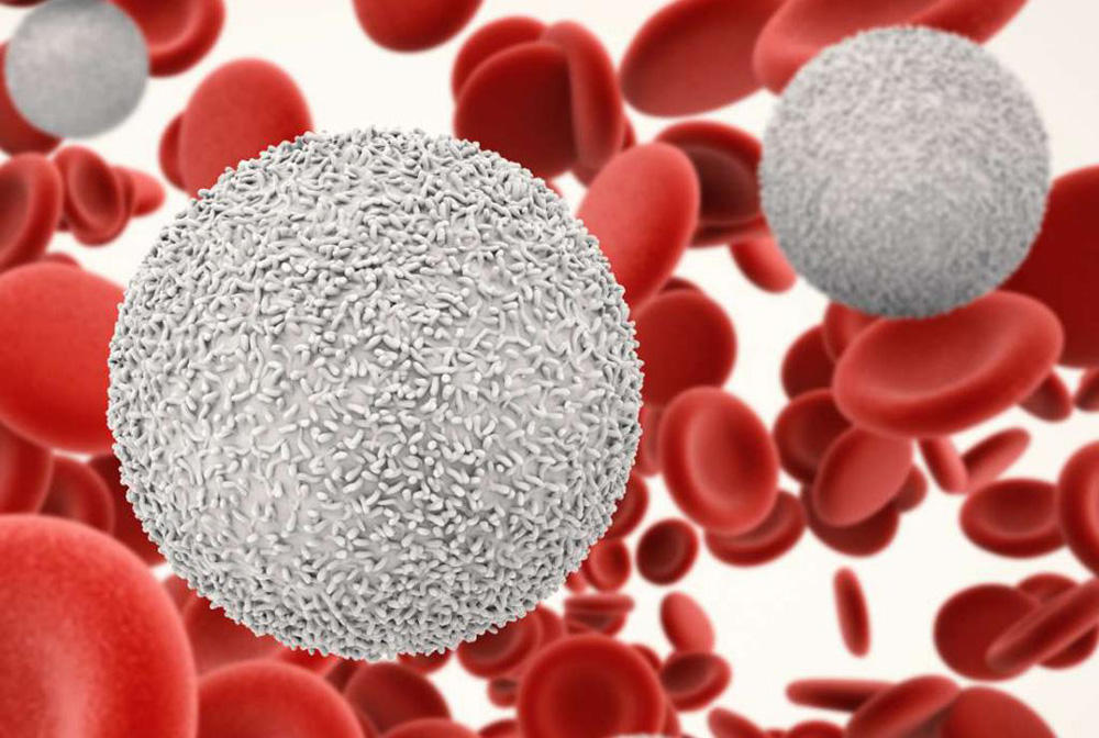 Что такое лейкоциты