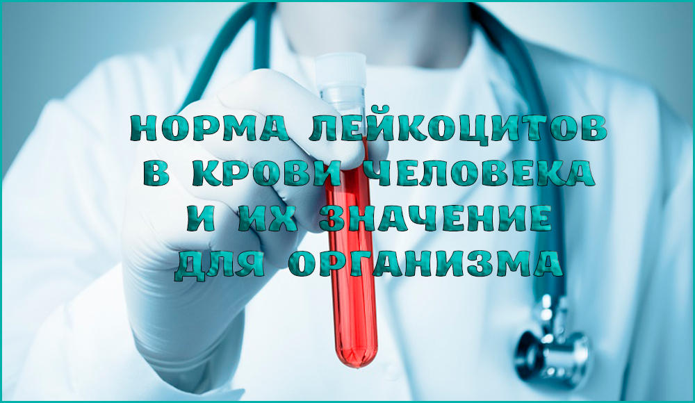 За что отвечают лейкоциты и какая их норма в крови человека