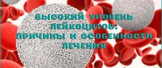 Причины высокого уровня лейкоцитов в крови и как его снизить